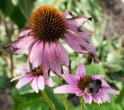 Blumen und Biene ` s Stockfotografie