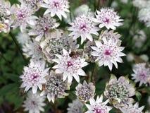 Blumen und Bienen Stockfotografie
