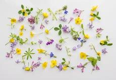 Blumen und Blätter des kleinen Maßstabs auf einem weißen Hintergrund Netter romantischer Hintergrund in der rustikalen Art Blumen Lizenzfreies Stockbild