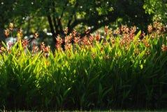 Blumen und Blatt der roten Farbe Lizenzfreies Stockfoto