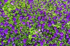 Blumen-und Blatt-Hintergrund stockfotografie