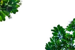 Blumen- und Blattrahmen mit weißem Hintergrund Lizenzfreies Stockfoto