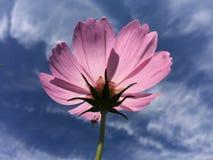 Blumen und blauer Himmel Stockfotografie