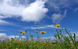 Blumen und blauer Himmel lizenzfreie stockfotografie