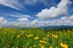 Blumen und blauer Himmel lizenzfreies stockbild
