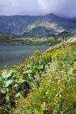 Blumen und der Trefoil See, Rila-Berg, die sieben Rila Seen Lizenzfreies Stockbild