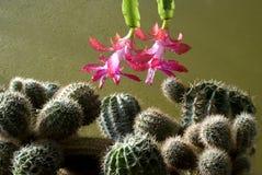 Blumen und Dornen Stockfotos