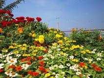 Blumen und Drahtseilbahn Stockfotografie
