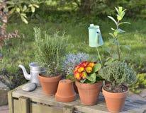 Blumen und Duftpflanzen eingemacht Stockfoto