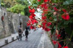 Blumen und eine Straße im Hintergrund Stockfotografie