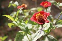 Blumen und Farben lizenzfreies stockfoto