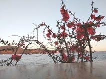 Blumen und Farben in der Türkei stockbild