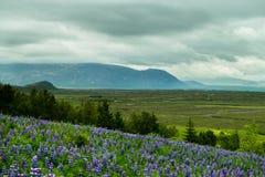 Blumen und Feld stockfotografie