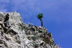 Blumen und Felsen Stockbilder