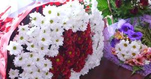 Blumen und Gänseblümchen mit den großen Blumenblättern und den klaren Farben, Frühlingsbild stock video
