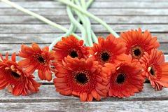 Blumen und gardend Stockfotos