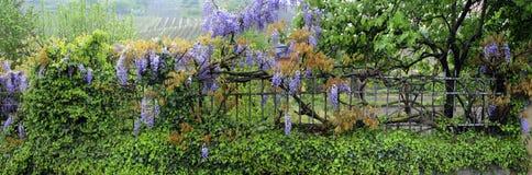 Blumen und Gartenzaun Lizenzfreie Stockbilder