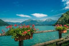 Blumen und Gebirgssee stockfotografie