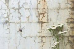 Blumen und gebrochene Betonmauer Lizenzfreie Stockfotografie