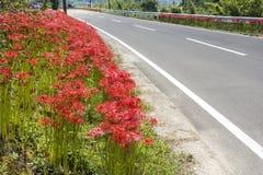 Blumen und gepflasterte Straße Stockfotos
