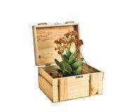 Blumen und Geschenkkasten Stockfotos