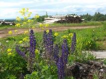 Blumen und geschnittene Bäume nahe russischem Dorf stockfotografie