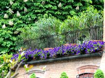 Blumen und Grün eines Hauses Lizenzfreie Stockbilder