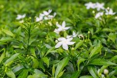 Blumen und grüner Busch Stockfoto