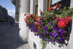 Blumen und Granit Stockfoto