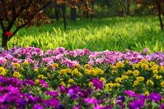Blumen und Gras stockfoto