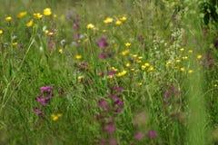 Blumen und Gras beleuchteten durch warmes sonnenbeschienes auf einer Sommerwiese, natürliche Hintergründe der Zusammenfassung für Lizenzfreie Stockbilder