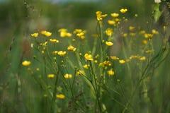 Blumen und Gras beleuchteten durch warmes sonnenbeschienes auf einer Sommerwiese, natürliche Hintergründe der Zusammenfassung für Stockfotografie