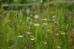 Blumen und Gras beleuchteten durch warmes sonnenbeschienes auf einer Sommerwiese, natürliche Hintergründe der Zusammenfassung für Stockfoto