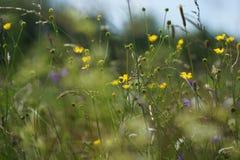 Blumen und Gras beleuchteten durch warmes sonnenbeschienes auf einer Sommerwiese, natürliche Hintergründe der Zusammenfassung für Stockfotos