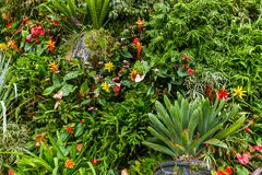 Blumen und Gras - Naturhintergrund stockfotos