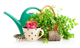 Blumen und Grünpflanzen für die Gartenarbeit mit Gartenwerkzeugen Stockbild