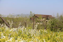 Blumen und Haus Stockfotos