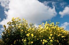 Blumen und Himmel Lizenzfreie Stockfotos