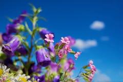 Blumen und Himmel Stockfotos