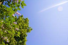 Blumen und Himmel Stockfoto
