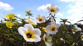 Blumen und Himmel Stockfotografie