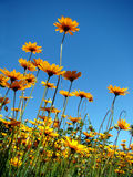 Blumen und Himmelkontrast lizenzfreies stockbild