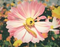 Blumen und Insekte stockbild