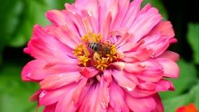 Blumen und Insekte stock footage