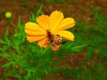 Blumen und Insekten - Bienen Lizenzfreies Stockfoto