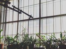 Blumen und Ketten am Fenster Lizenzfreie Stockfotografie
