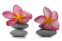 Blumen und Kiesel Stockbild