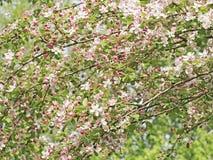 Blumen und Knospen Stockfotos