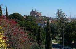 Blumen und La Seu-Kathedrale Stockfoto