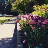 Blumen und Landschaften lizenzfreie stockfotos